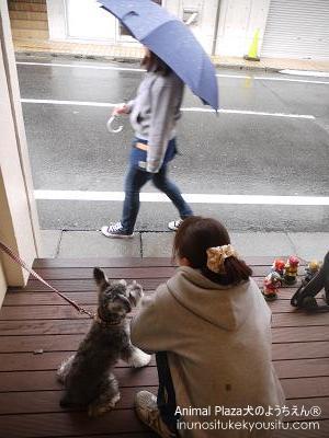 傘の社会化-1