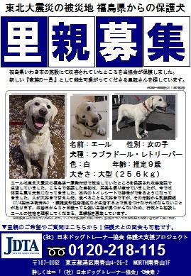 保護犬支援プロジェクト_里親募集