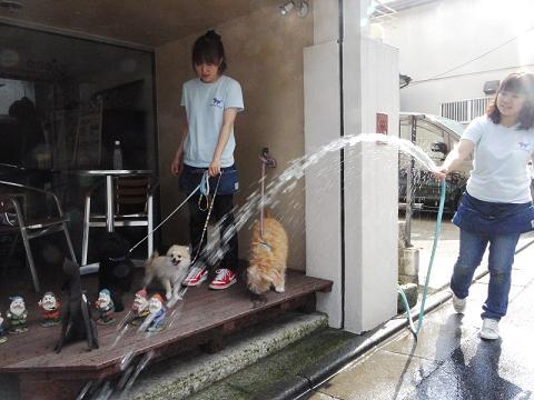 子犬のしつけ_犬のようちえん®広尾教室_水の社会化