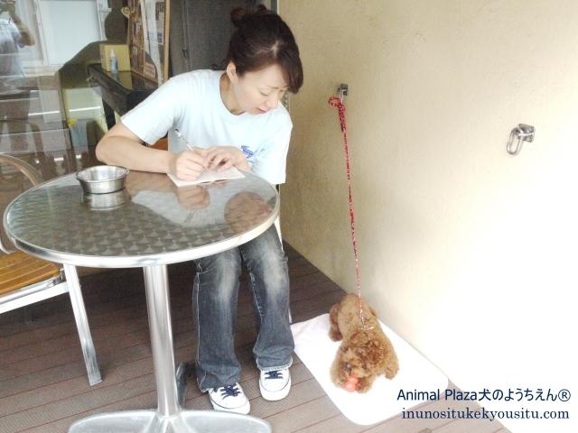 子犬のしつけ_犬のようちえん®広尾教室_カフェ練習
