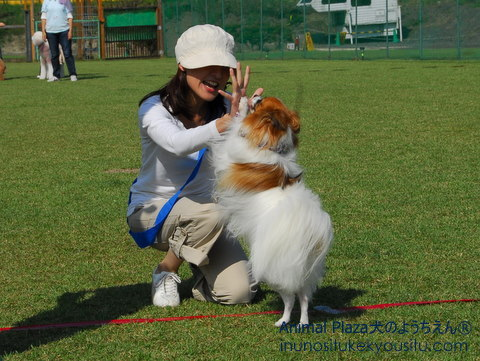 子犬のしつけ_犬のようちえん®広尾教室_運動会