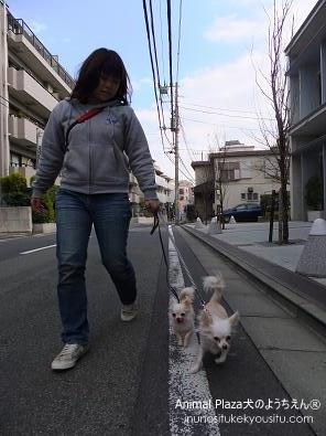 子犬のしつけ_犬のようちえん®広尾教室_お散歩