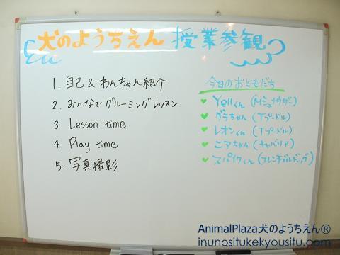 子犬のしつけ_犬のようちえん®広尾教室_イベント授業参観