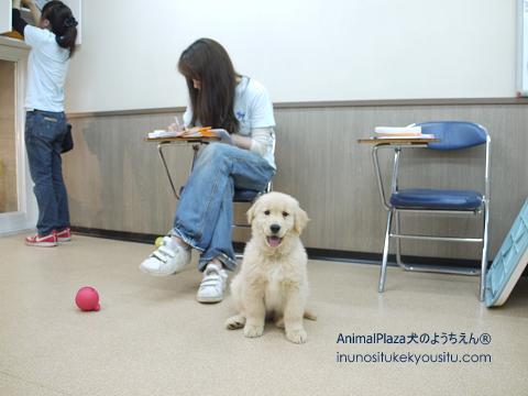 子犬のしつけ_犬のようちえん®広尾教室_そらくん