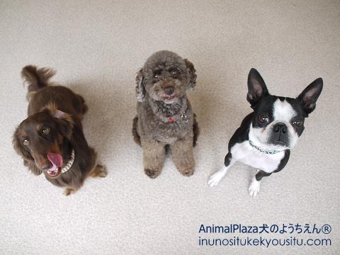 子犬のしつけ_犬のようちえん®広尾教室_集合写真