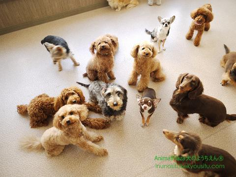 子犬のしつけ_犬のようちえん®広尾教室_小型犬集合写真