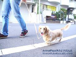 お散歩マナー_犬のようちえん®広尾教室