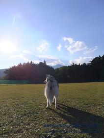 子犬のしつけ_犬のようちえん®広尾教室_ロイちゃん