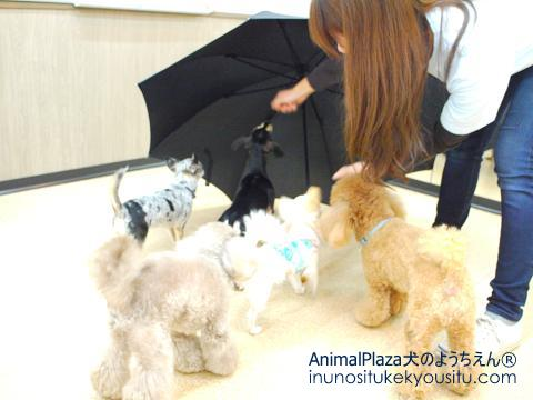 犬のようちえん®広尾教室_授業参観