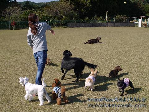 子犬のしつけ_犬のようちえん®広尾教室_集合