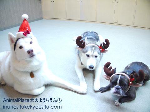 ララちゃん、ロイちゃん、フィービーちゃん。「わたしたちにプレゼントないの?え、配る係!?聞いてないよ~」