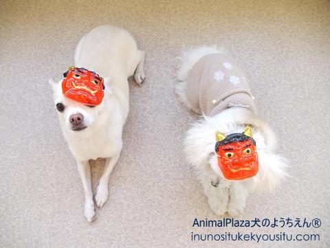 子犬のしつけ_犬のようちえん®広尾教室_チェリーちゃん、Jazzちゃん