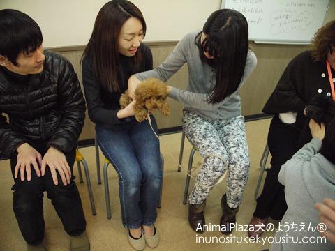 子犬のしつけ_犬のようちえん®広尾教室_抱っこリレー