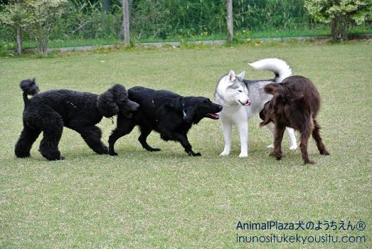 フィンくん、ティナちゃん、ロイちゃん、ロビンくん「大型犬チーム♪」
