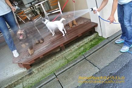 子犬のしつけ_犬のようちえん®広尾教室_水浴び