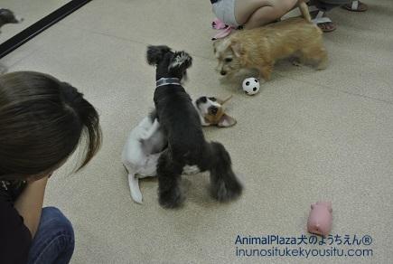 子犬のしつけ_犬のようちえん®広尾教室_授業参観