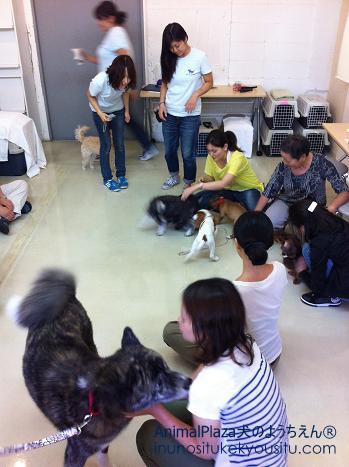 犬のようちえん®広尾教室_ぼくと一緒に社会化体験♪_ぼくと一緒に社会化体験♪_ふれあいタイム1