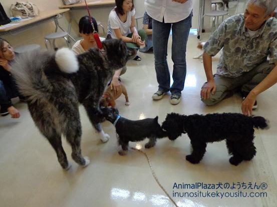 犬のようちえん®広尾教室_ぼくと一緒に社会化体験♪_ぼくと一緒に社会化体験♪_ふれあいタイム2