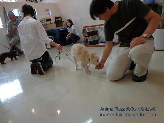 犬のようちえん®広尾教室_ぼくと一緒に社会化体験♪_ぼくと一緒に社会化体験♪_人の社会化3
