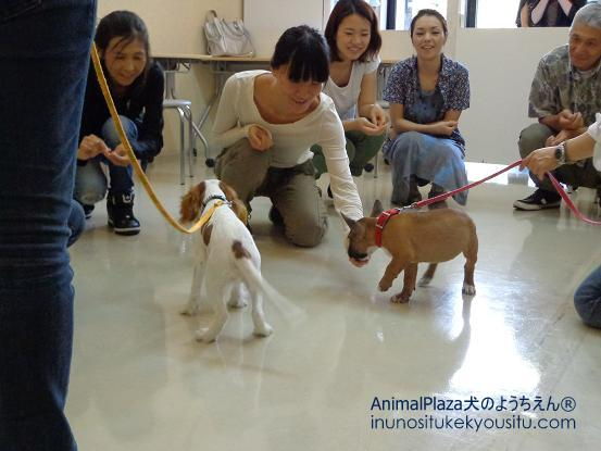 犬のようちえん®広尾教室_ぼくと一緒に社会化体験♪_ぼくと一緒に社会化体験♪_人の社会化2