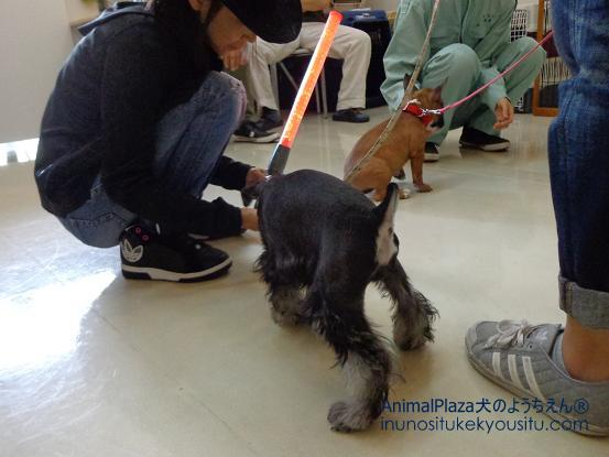 犬のようちえん®広尾教室_ぼくと一緒に社会化体験♪_ぼくと一緒に社会化体験♪_変装1