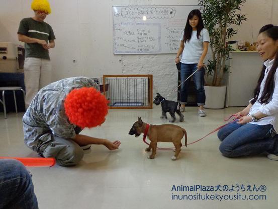 犬のようちえん®広尾教室_ぼくと一緒に社会化体験♪_ぼくと一緒に社会化体験♪_変装2