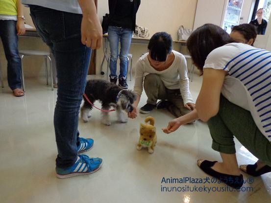 犬のようちえん®広尾教室_ぼくと一緒に社会化体験♪_ぼくと一緒に社会化体験♪_物の社会化