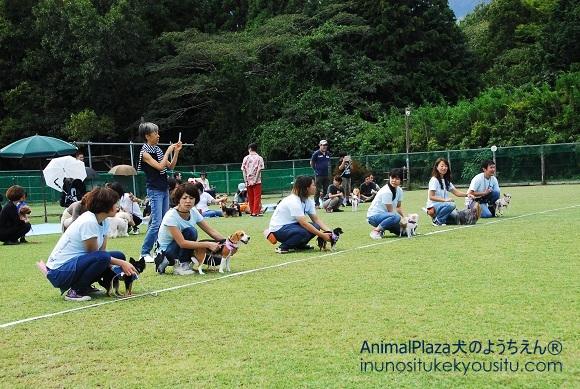 AnimalPlaza犬のようちえん®inunositukekyousitu.com