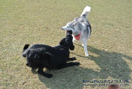 子犬のしつけ_犬のようちえん®広尾教室_秋の遠足2日目