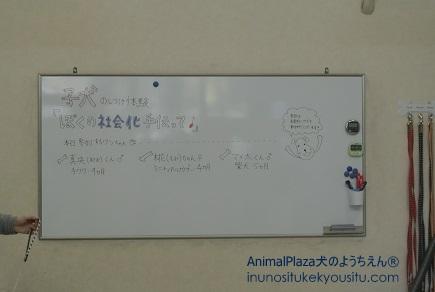 子犬のしつけ_犬のようちえん®広尾教室_イベント