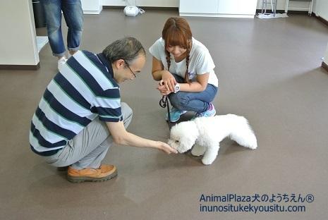 子犬のしつけ_犬のようちえん®広尾教室_パピーパーティー