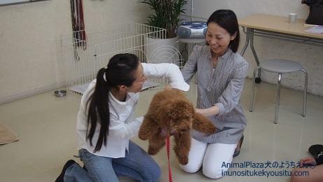子犬のしつけ_犬のようちえん®広尾教室_ボクの社会化手伝って