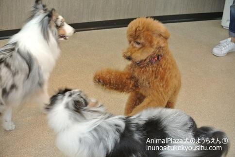子犬のしつけ_犬のようちえん®広尾教室_授業参観第二部