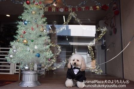 子犬のしつけ_犬のようちえん®広尾教室_2015クリスマス
