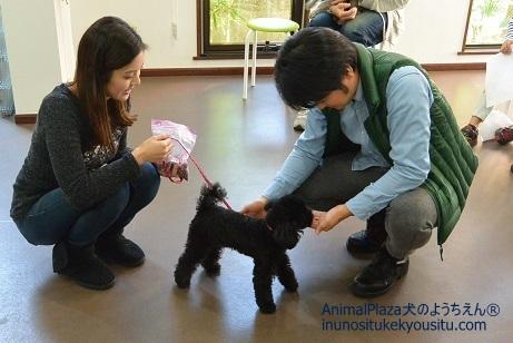 子犬のしつけ_犬のようちえん®広尾教室_パピーパーティー(11/28)