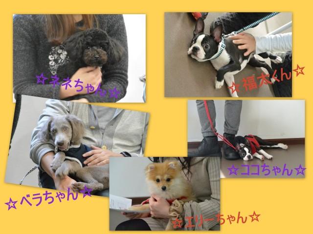 子犬のしつけ_犬のようちえん®広尾教室_パピーパーティー(11/28