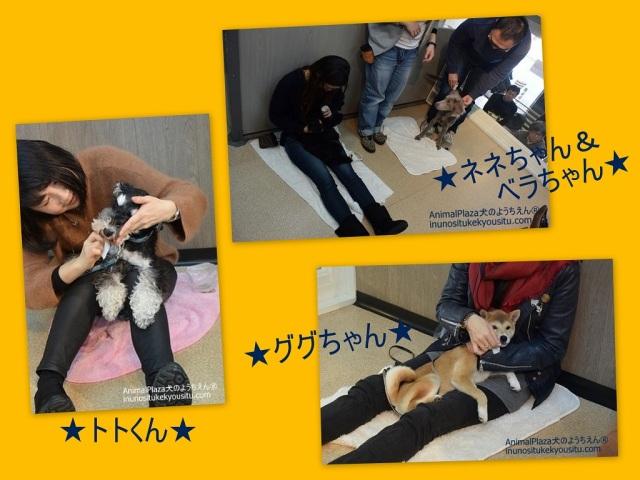 子犬のしつけ_犬のようちえん®広尾教室_授業参観(2/27)