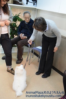 子犬のしつけ_犬のようちえん®広尾教室_パピーパーティー(3/26