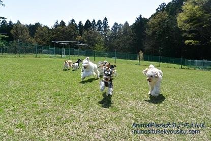 子犬のしつけ_犬のようちえん®広尾教室_春の遠足2日目