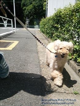子犬のしつけ_犬のようちえん®広尾教室_広尾教室のPlaytime