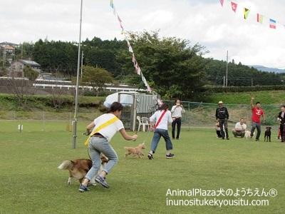 子犬のしつけ_犬のようちえん®広尾教室_秋の運動会2016