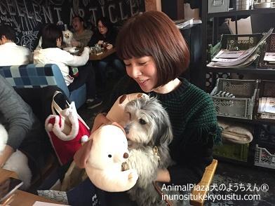 子犬のしつけ_犬のようちえん®広尾教室_Xmasパーティー2016